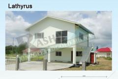 AALathyrus