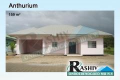 Anthurium-1
