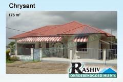 Chrysant-1