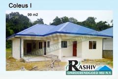 Coleus-I-1