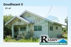Goudfazant-II